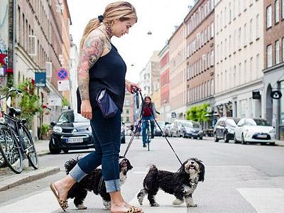 Bootcamp Hundeturen - Københavnersnuden.dk