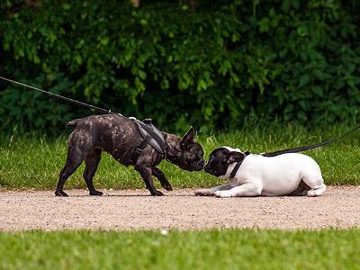 Bootcamp hund til hund - Københavnersnuden.dk